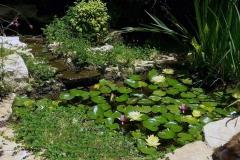 בריכת נוי עם צמחי מים
