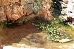 עיצוב-גינות-גינת-כרמל-סלע-טבעי-שהפך-לבריכה