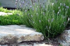גינה בצל אלונים - מדרגות אבן מתחברות לצמחיה