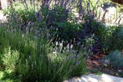 גינה בצל אלונים - מרווה ואזוביון