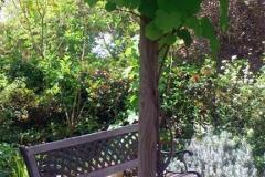 גינה יפה ללא דשא - מתחת ל סוכת גפנים