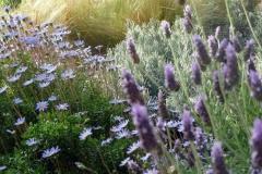 גינה יפה ללא דשא - אפור וסגול