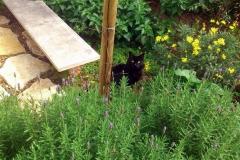 גינת כרמל ישראלית - חתול-שחור גינה ירוקה