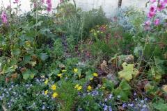 גינת כרמל ישראלית - באביב-פריחה-כמו-בטבע