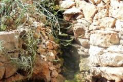 עיצוב-גינות-גינת-כרמל-מפל-מים-לסלע-טבעי