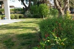 עיצוב גינה מיוחדת - מדשאה