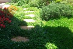 גינה בהרצליה - פינת מדשאה ושביל אבני מדרך