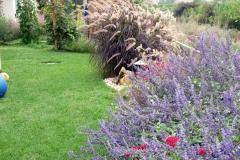 גינה קטנה בשרון - מדשאה