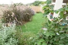 גינה קטנה בשרון - מסביב לדשא