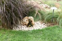 גינה קטנה בשרון - סלע נובע