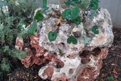 גינה קטנה בשרון - סלע רקפות