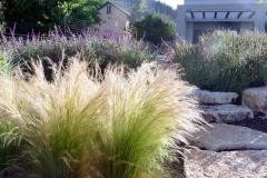 הסטיפה-משקיפה-על-הגינה-והבית