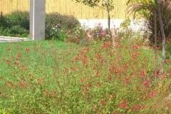 עיצוב-גינה-מודרנית-דשא-וצמחיה-במראה-טבעי-4