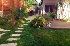 כלבה-וחתול-בגינה