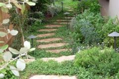 השביל-בגינה-ולצידו-צמחי-התבלין