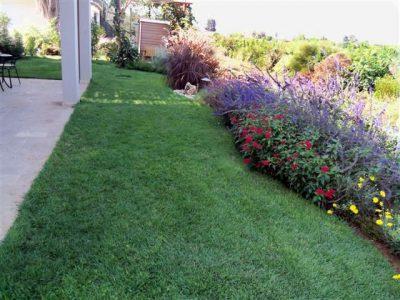 עיצוב גינות -מדשאה