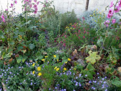 עיצוב גינות - גינת כרמל באביב - פריחה כמו בטבע