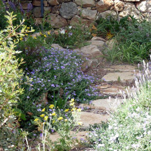 עיצוב גינות - גינת כרמל באביב - שביל בחיפוי לצד המסלעה