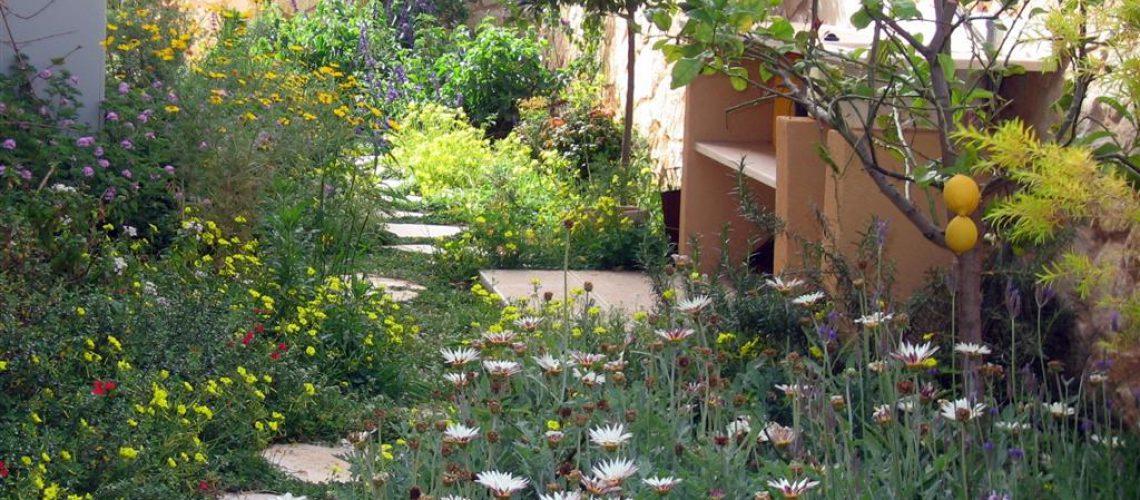 שביל בגינה ארצישראלית עם פרחי בר