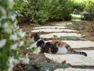 חתול על השביל בגינה